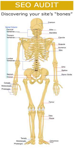 Included in Your Web Site Audit X-Ray
