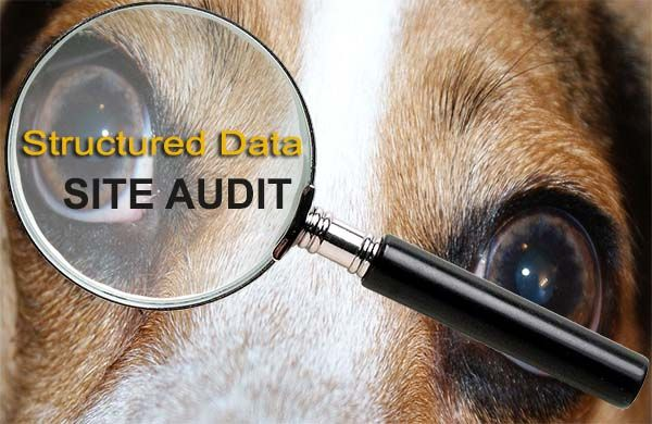audit and review website structured data