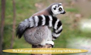 How to use Informational Long-Tail Keywords